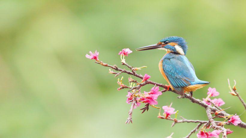 Bird Idioms  有關鳥類的俚語